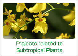 Projects related to Subtropical Plants