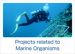 Projects related to Marine Organisms