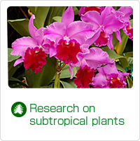 Research on subtropical plants