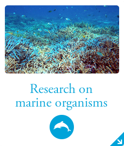 Research study on marine organisms