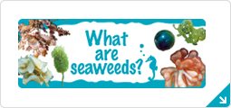 What are seaweed?